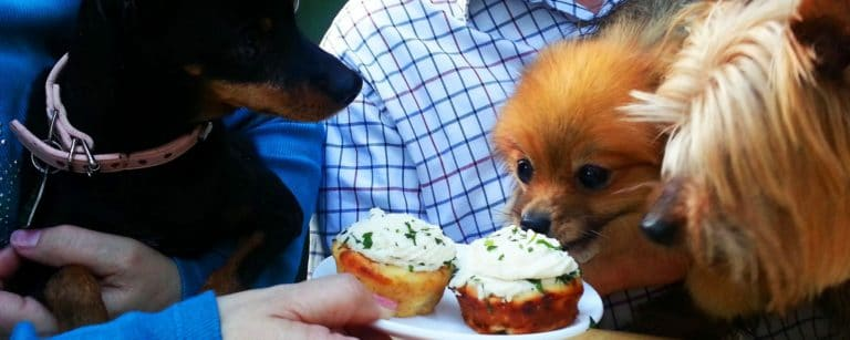 Dining out with your dog in Friday Harbor