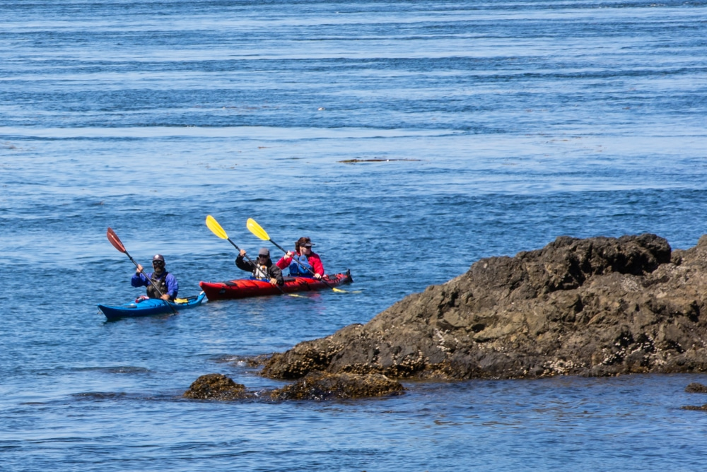 Paddling around Lime Kiln State Park on a San Juan Islands Kayak Tour